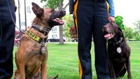 2 Texas search dogs strangled during pursuit