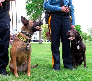 The dogs, ages 8 and 3½, were also used to help locate people with dementia and Alzheimer's who had wandered away from their homes. (AP Photo/Wayne Parry)