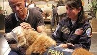 Last 9/11 rescue dog celebrates 16th birthday in New York