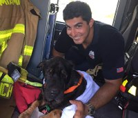 Video: Firefighter saves 12-year-old dog struggling to swim
