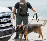 REDDI training preps explosive detection K-9 teams