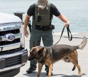 An explosive detection K-9 team working in an operational search scenario at a DHS S&T REDDI event in Miami, Florida.