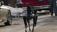 State your case: Should the NYPD have returned its robot dog?