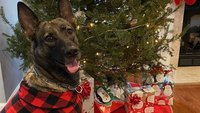 Photo of the Week: Santa Paws