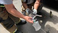 First responders rescue newborn puppy from fire that displaced 9 people