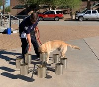 Phoenix FD adds 65-pound arson dog
