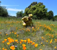 Photo of the Week: Calif. firefighters rescue flowers from invasive tree species on Earth Day