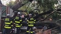 19 injured when tree falls on garage