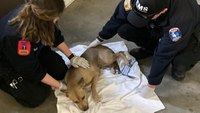 Kan. paramedics recognized for saving dog struck by vehicle