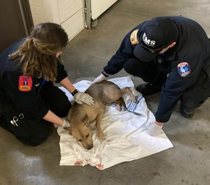 Sedgwick County Paramedics Levi Davidson and Jennifer Erskin were recognized for rescuing a dog, named Sugar, who was struck by a vehicle last week.