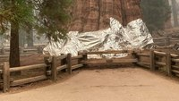 'General Sherman,' world's largest tree, wrapped in foil to protect from wildfire