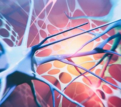 Quiz: Sympathetic and parasympathetic nervous systems