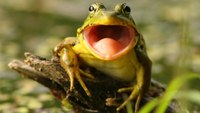 'Eat the frog' and other time-saving tips
