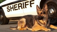 New Fla. law allows injured police K-9 dogs ambulance rides to clinics