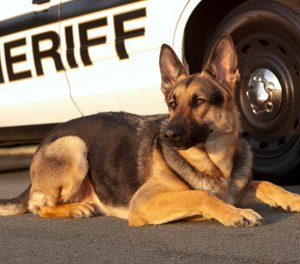 Gov.Ron DeSantissigned a bill Friday aimed at protecting K-9 dogs that work alongside law enforcement.