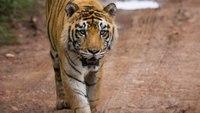 Tiger King, the Home Quarantine Game