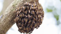 Calif. FFs attacked by bees during rescue attempt