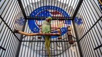Mont. firefighters rescue pet parrot from house fire, get a new mascot
