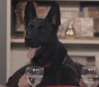 Calif. K-9s sit down for Thanksgiving dinner in funny video skit