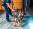 Paws before boots: See through your K-9's eyes