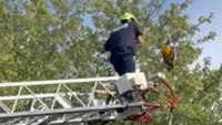 Video: Ohio firefighters rescue macaw from tree