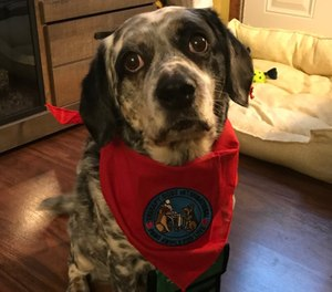 Marley, a mixed breed rescue, recently completed an eight-week training course through Therapy Dogs International to become a canine therapy dog for the members of CHS Mobile Integrated Health Care. (Photo/Courtesy of CHS MIHC)