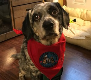 Marley, a mixed breed rescue, recently completed an eight-week training course through Therapy Dogs International to become a canine therapy dog for the members of CHS Mobile Integrated Health Care.