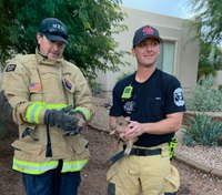 Photo of the Week: Ariz. firefighters rescue javelina from storm drain