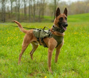 The new Nomad harness from Ray Allen offers a modular system that allows users to interchange the harness frame with different types of body capes to economically customize their gear and quickly equip a dog for any situation. (image/Ray Allen Mfg.)
