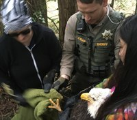 Photo of the Week: Roadside eagle rescue