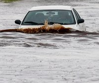 Phoenix firefighters make several water rescues in record rainfall