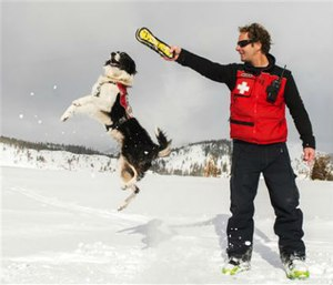 Border collie Wylee trains on the mountain to search for avalanche victims. (Matt Palmer/Squaw Valley Alpine Meadows via AP)