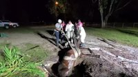 Fla. FFs rescue horse from septic tank