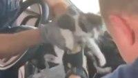 Video: Ariz. FFs rescue kitten from car dashboard