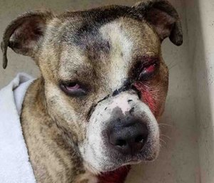 Winks will require surgery to remove his eye after being shot in the face. (Photo/GoFundMe)