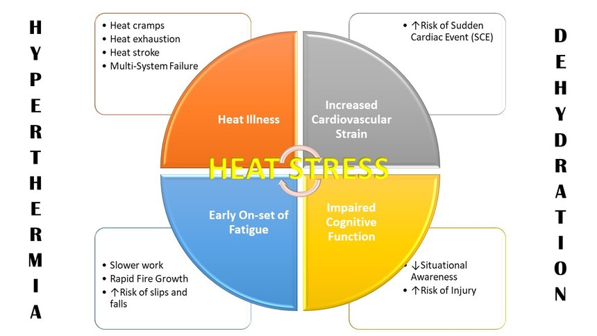 "Original graphic by Robert Avsec based on information from ""Effect of Heat Stress and Dehydration on Cardiovascular Function."""