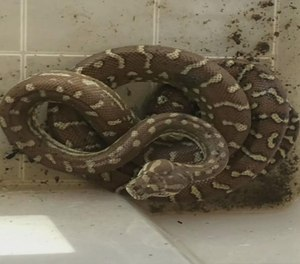 Firefighters rescued hundreds of snakes while battling a house fire. (Photo/ Phoenix Fire Department)