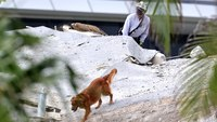 Rescuers in Fla. condo collapse face unique set of challenges