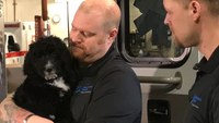 Mich. EMS providers welcome 11-week-old therapy dog