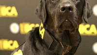 New Minn. K-9 trained to sniff out electronic evidence