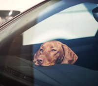 New NY law allows first responders to remove animals left in vehicles