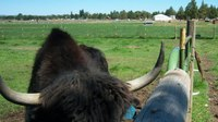 Lawsuit: 911 dispatcher failed to send ambulance after yak attacked Ore. man