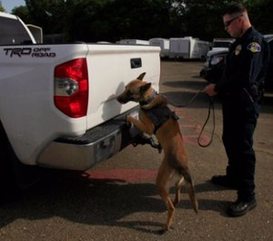 Police Officer Kevin Murray works with police dog, Thor, as the dog searches a Toyota Tundra at the impound lot in Ukiah, CA May 14, 2014.