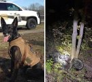 This combined photo shows K-9 Faust and the motorcycle crash Faust helped investigate.