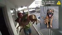 Video: Woman throws dog off balcony as police approach