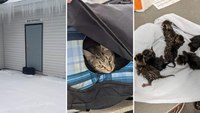 Bomb squad finds kittens in 'suspicious package' at church