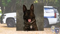 Texas K-9 killed during pursuit of armed robbery suspects