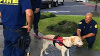 Arson dog searches Honolulu high-rise for ignitable liquids