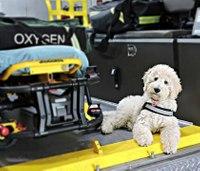 Therapy dog comforts Texas paramedics