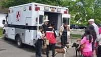 'EARS' unit provides free ambulance transport to Conn.'s  injured pets